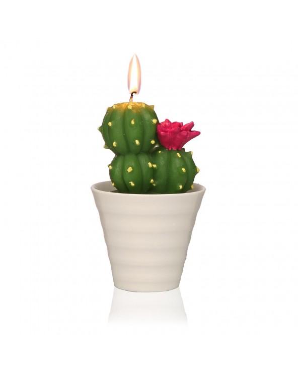 Vela cactus con maceta...